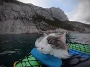 Cat Napping Away On A Paddle Boat