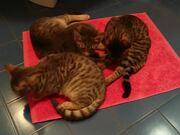 Cat's Party