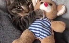 Even Catto Needs Plushie To Fall Asleep
