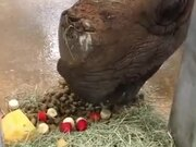 A Special Treat For Rhino On Her 33rd Birthday
