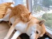"""""""No, You're My Bed Now."""""""