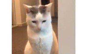 Cat Doesn't Like Heavy Music