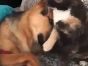 Cute Doggo Asks For Licks From Catto