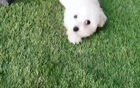 The Cutest Doggo