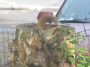 A Squirrel In Its Tree Stump Apartment