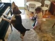 Baby And Doggo's New Band