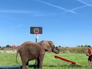 You Thought Your Basketball Goal Was Nice? Hah!