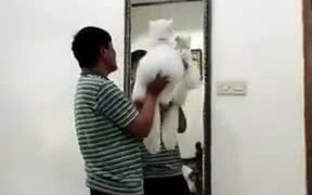 Dads After Buying Pets They Never Wanted