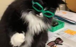 Cat Needs Glasses For Better Handshakes