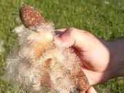 Cattail Fluffs In Slow Motion