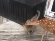 Deer And Cat Are Really Good Friends