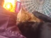 Ferocious Cat Starts Eating Doggo Alive