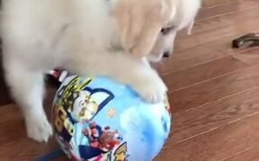 What A Cute Little Puppy