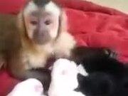 Cute Monkey Meets The Puppies For The First Time