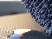 Wool Absorbing A Drop Of Water