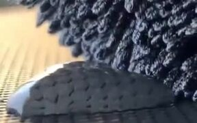 Wool Absorbing A Drop Of Water