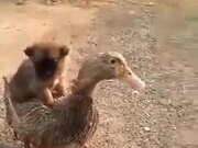 Puppy And The Duckling Are The Latest Super Pair