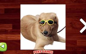 Funny Dogs Puzzle Walkthrough