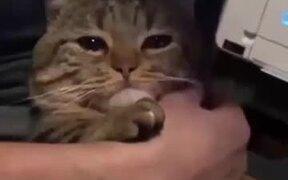 Sad Cat Needs A Love