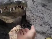 Probably The Cutest Alligator In Existence