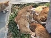 A Sleeping Party For Cats
