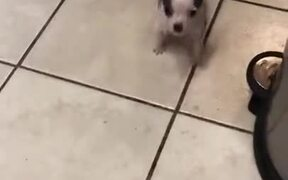 A Tiny Cute Puppy To Make Your Day