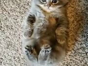 Tiny Kitten Kicks Like A Bunny