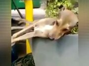 Deep Sleeping Dog Got Pranked!