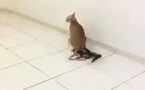 Is This A Cat Homicide In Action?