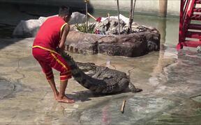 The World's Largest Crocodile In Captivity