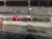 The World's Largest Crocodile In Captivity