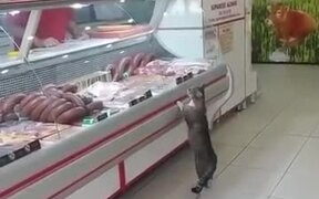 Cat Visits The Meat Shop For Some Nice Cuts