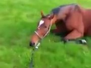 Even Racehorses Need To Derp Around