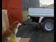 Doggo Now Helps With Cars Parking