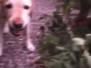 Doggo Loves His Salad