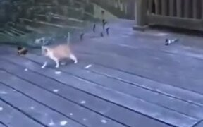 Kitten's Very Amused By The Peacock