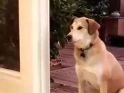 Doggo, There Is No Door!
