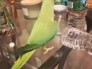 Cute Parrot Flips Over Bottles