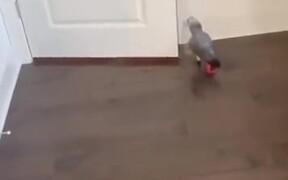 Parrot Having Fun Flinging Bottles