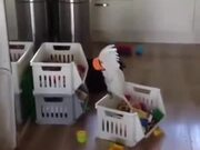 Cockatoo Sipping Tea Like Nobody's Business