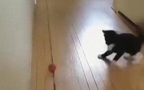 Kitten Having A Great Time