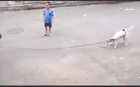 Doggo Great With Skipping Rope