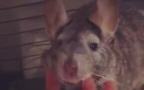 Even Rats Can Be Absolute Cutie Pies