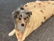 How To Make A Doggo Wrap