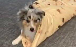 How To Make A Doggo Wrap