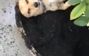 Dogs Really Do Love Dirt