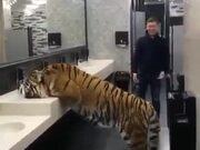 Oh My God, Tiger In A Bathroom!