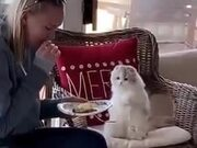 Cat Begs For Food, She Doesn't Share