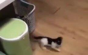 A Cat Fishing For A Kitten