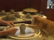 Cat Is Rather Good At Pottery